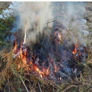 vypalovanie travy